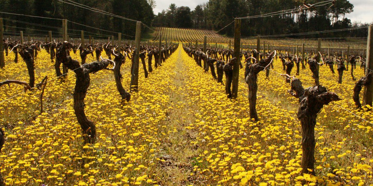 Balade à la découverte du vignoble du Médoc - Activité proposée par UNI MEDOC