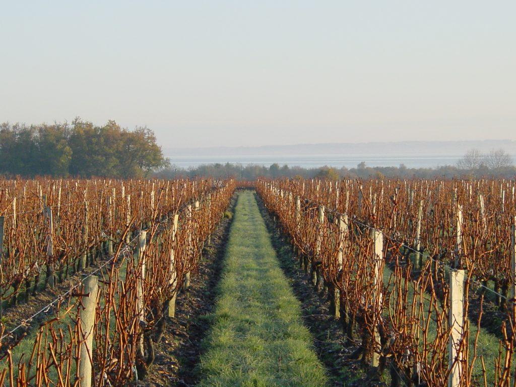 Vignes sur l'estuaire de la Gironde en hiver