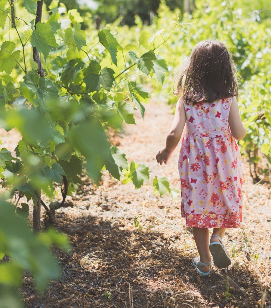 Petit fille marchant à travers les vignes en été